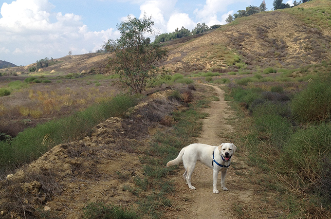 Hiking trail with dog.