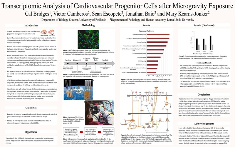 SSR 2020 Transcriptomic Analysis of Cardiovascular Progenitor Cells after Microgravity Exposure.jpg