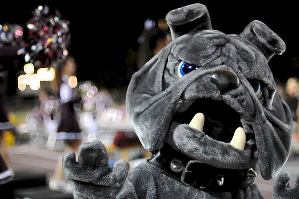 Costume Bulldog Mascot at a football game
